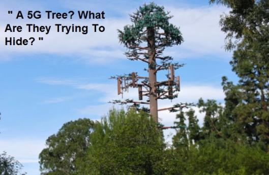 5g tree