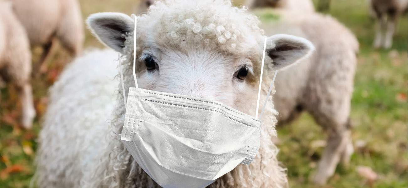 sheep-with-mask