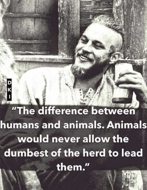 quote-difference-between-humans-animals-dont-pick-dumbest-to-lead-them-herd